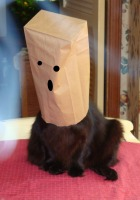 Cat with a bag on her head.